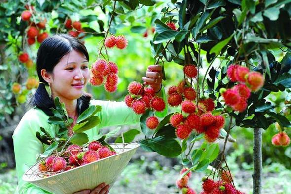 Trải nghiệm tuyệt vời vườn trái cây tại Cần Thơ