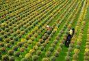 Quang cảnh tuyệt đẹp của làng hoa Sa Đéc thời điểm trước Tết cổ truyền